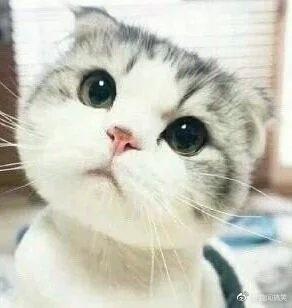小白猫有着嘴角上扬,生气嘟嘴,抿嘴不屑,瞪眼呆萌等各种不同的表情