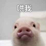 笑出猪叫表情表情包失眠搞笑图片
