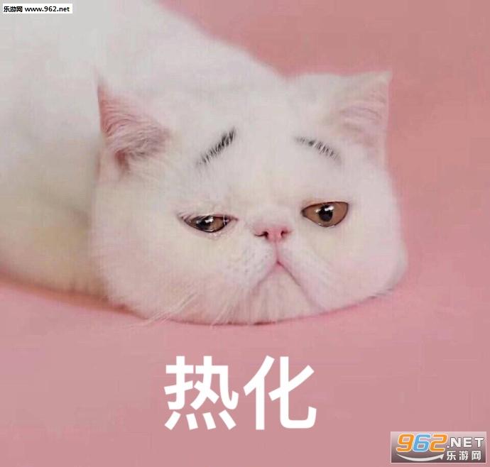 不应当我只是只小猫咪表情包|你开枪吧反正我的心早就图片