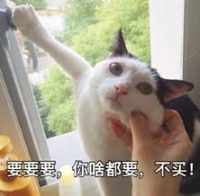 好吧今天先不买了猫我要|表情这个给我买掐表情包搞笑陆丰图片