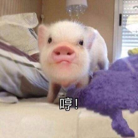 最近流行的吸猪表情表情包得图好说图片