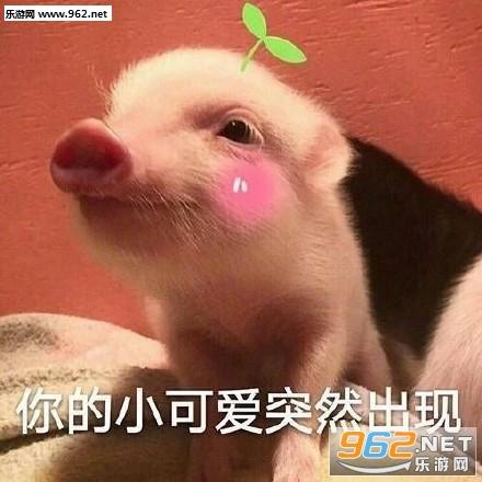 最近流行1的吸猪表情的愤怒表情包图片吃惊图片