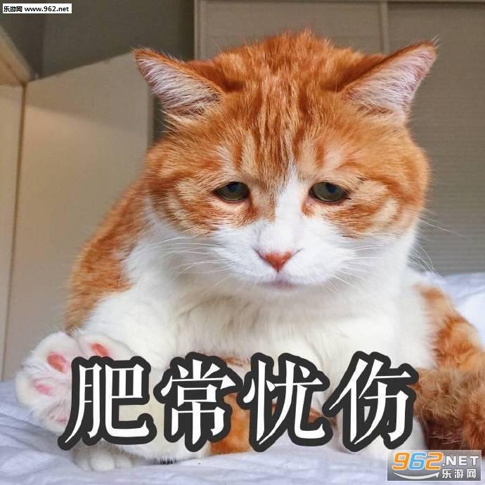 满脸都写着高兴橘猫表情疼昏厥表情包