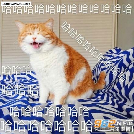 满脸都写着高兴橘猫表情困带字的搞笑图片图片