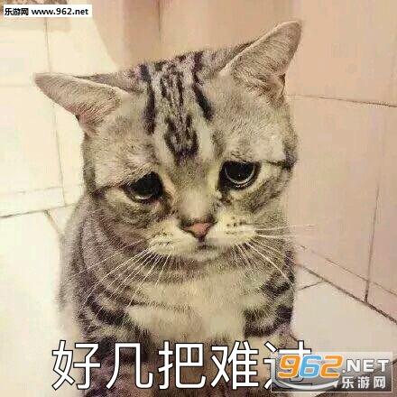 你的小可爱突然招租吸猫表情广告表情包出现位图片