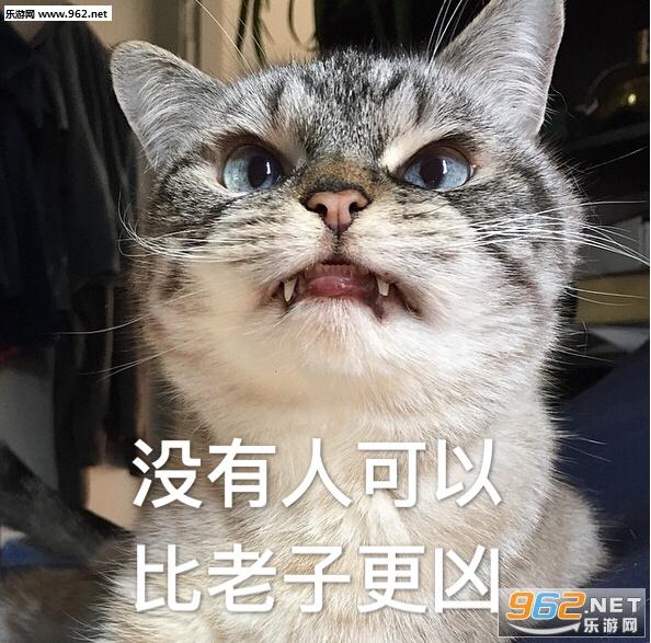 你的小可爱突然出现吸猫表情peace+love&表情包图片