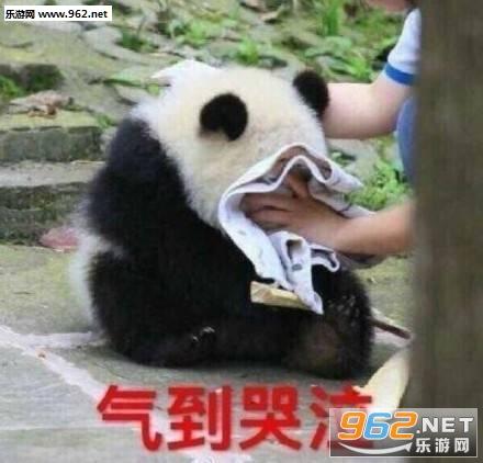 我不听我不听表情熊猫样儿图表情包傻国宝图片