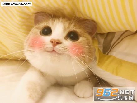 bobi表情超搞笑猫咪|超级无敌之极度可爱表情字乖巧表带包陈鹤一图片
