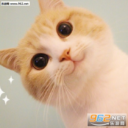 猫咪的名字叫做bobi,看着就非常的可爱,各种萌萌的动作让你一款就立马