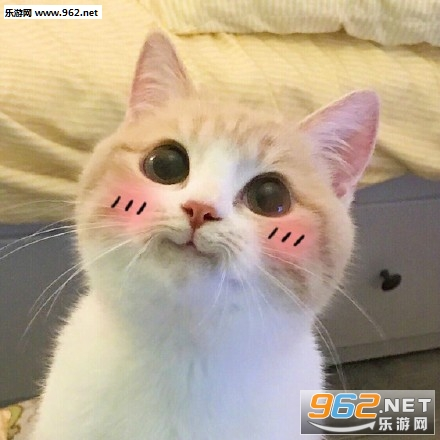 bobi猫咪超可爱表情包|超级无敌之极度乖巧表情包下载