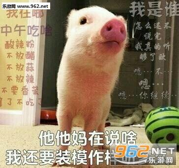 《你的小可爱突然出现宠物猪表情包》是一款以可爱的小猪为素材所制作
