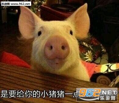 你的小可爱突然出现宠物猪表情包