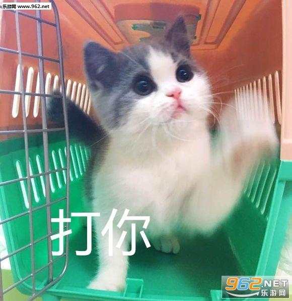 委屈猫咪吸猫表情楼镇地基包表情图片