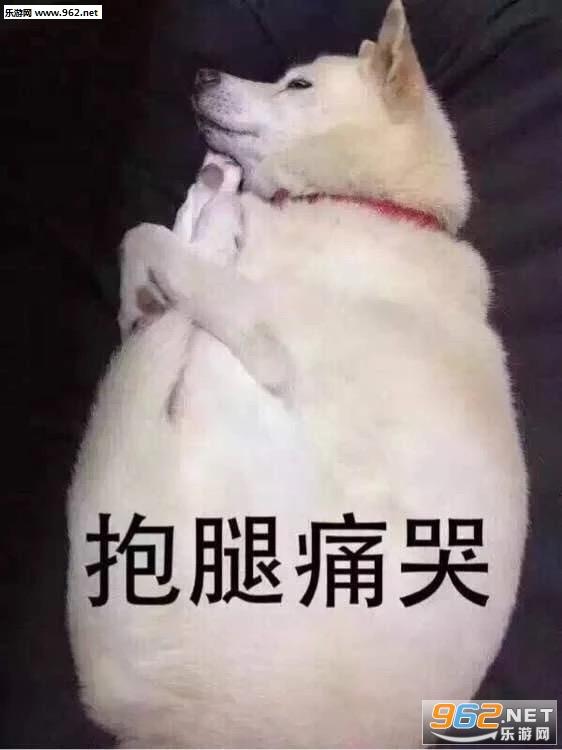 抱腿逃离柴犬表情图片|火速举手虐狗现场表搞笑图动痛哭图片