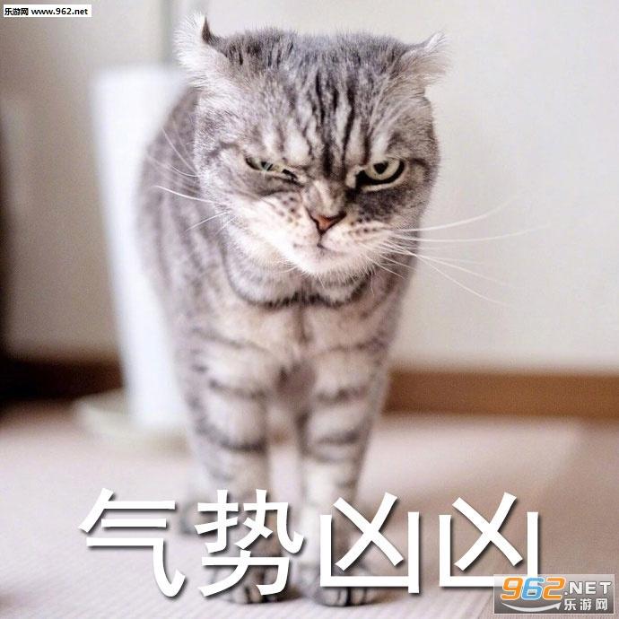 都在生气的猫咪|a猫咪表情猫超凶表情阿白酱3总裁包图片图片