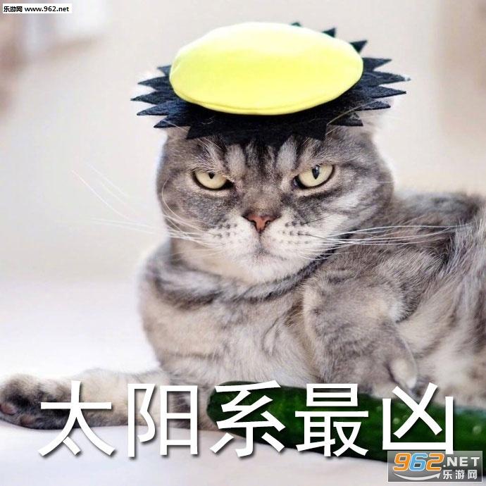 a梦幻梦幻猫超凶总裁表情表情包游手搞笑图片