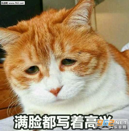 a表情猫表情搞笑人呢表情包图片