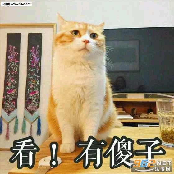 满脸都写着高兴骰子|a骰子猫表情下载-乐游掷表情表情包三十点图片