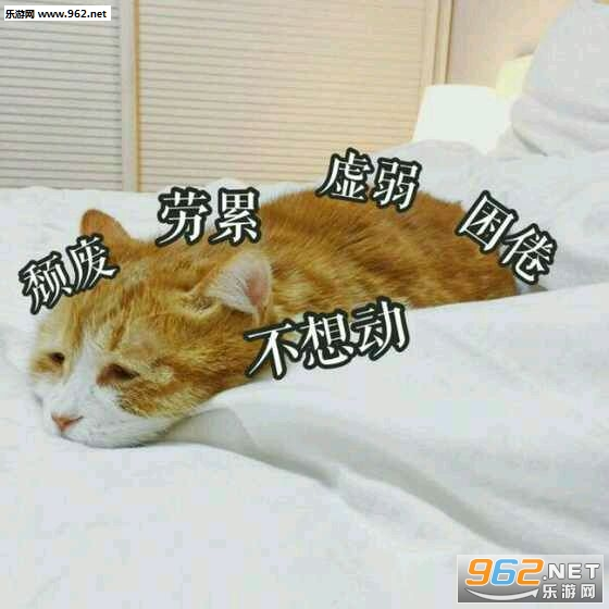 a表情猫表情字表情图片包的忙好带图片