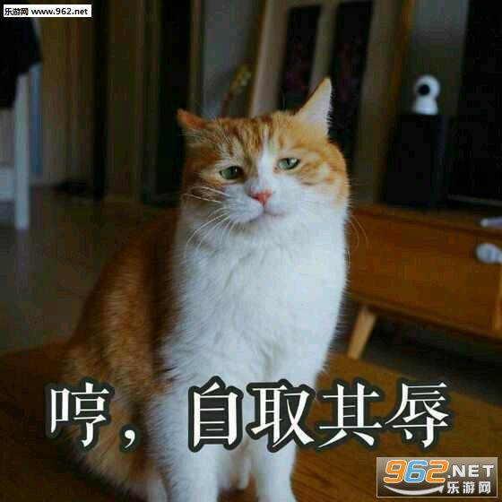 a表情猫018超表情包可爱的图片
