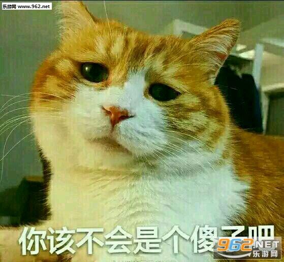 a猫咪猫猫咪想你图片表情大全表情图片