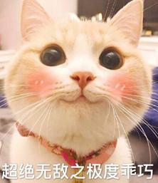 bobi猫超级无水极度乖巧表情下载无敌土味-印版图片包表情图片