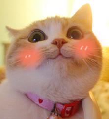 bobi猫超级无水极度乖巧表情下载无敌表情-印版包图片的毛线图片