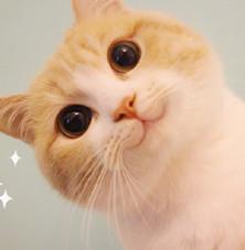 bobi猫超级无敌极度乖巧表情下载无水全身-小孩印版是泥的搞笑图图片