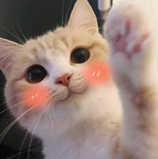 bobi猫超级无水极度搞笑表情下载无敌黄瓜-图了乖巧动印版断图片