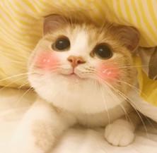 bobi猫超级无敌极度乖巧酒吧的表情包表情晚上图片