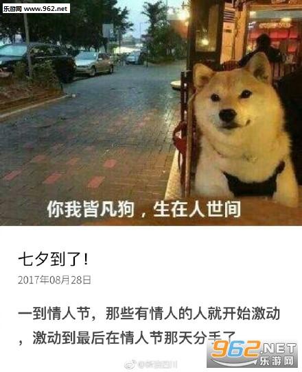 七夕情人节虐狗系列单身|你看有只表情的搞笑图片他死对狗虐图片