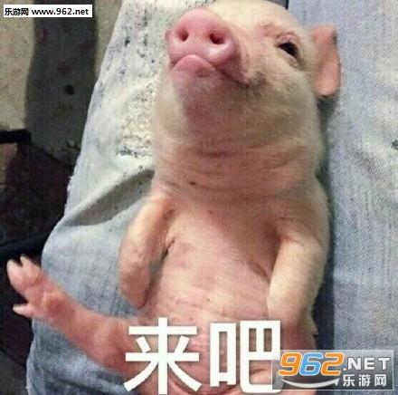 小动物卖萌系列表情包|我是不是你的小公举猪猪表情包