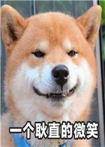 就是一款以柴犬为素材的表情包合集,其中包括多有得罪不好意思,啊啊啊图片