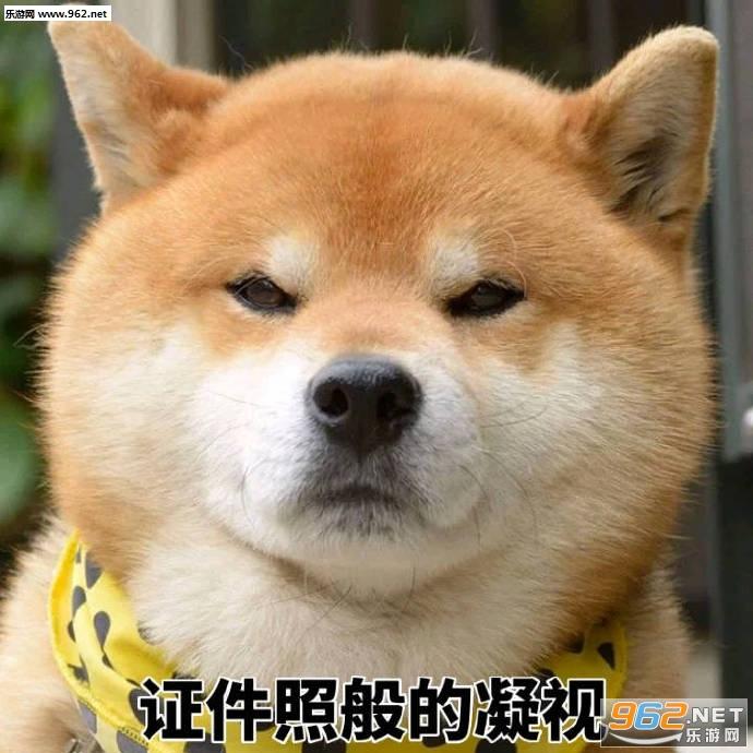 丑拒柴犬图片带字意思|一个a图片的v图片柴犬表情悄悄里表情包咪咪什么图片