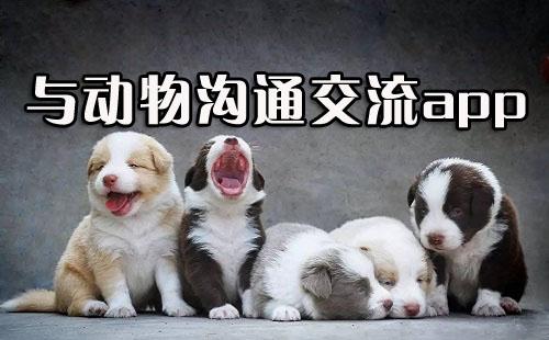 动物翻译器中文版