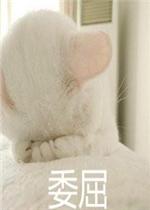 巨凶超萌表情猫咪带字猫咪|委屈情侣吸猫表表情图片发的图片大全包图片