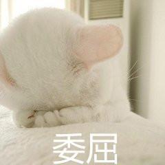 巨凶超萌猫咪表情带字表情 委屈图片吸猫表老婆的我错猫咪包微信了图片