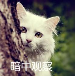 委屈表情吸猫动态超小表情包的旺旺猫咪可用图片