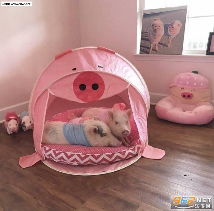 有了我你就不喜欢1其它的猪了吸猪表情表情机微信图手图片