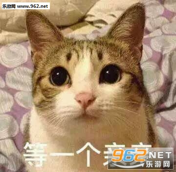 你的小可爱突然出现吸猫表情包