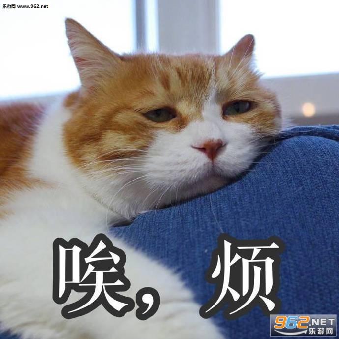 满脸都写着高兴橘猫表情崩坏1rd6483rd表情包图片