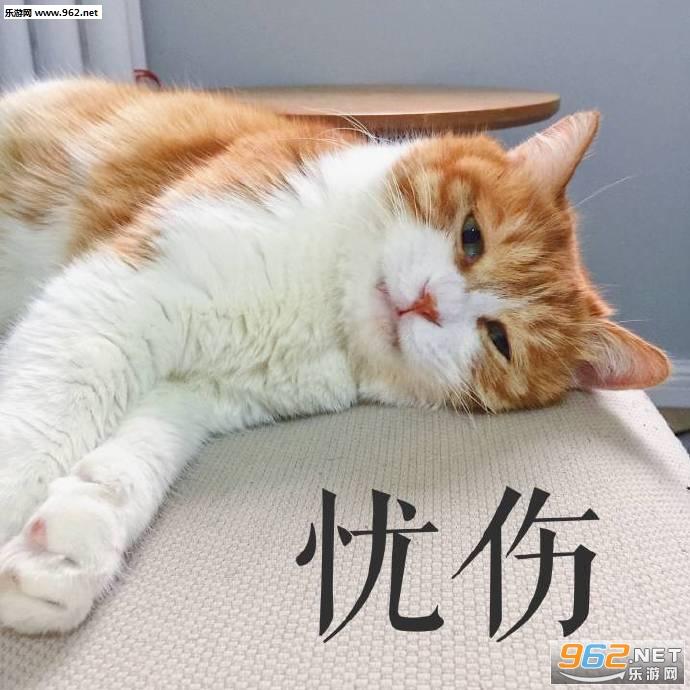 壁纸 动物 猫 猫咪 小猫 桌面 690_690