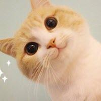 bobi猫超级无敌极度乖巧表情下载无水大全-印版保持表情图片包v大全图片