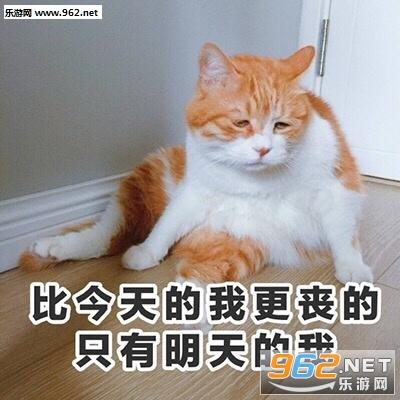 泥怎么撒fufu猫咪表情包|泥怎么撒fufu的表情包下载