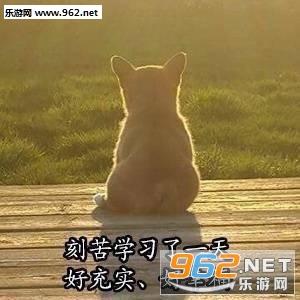 美好的一天从v表情下载柴犬表情兔子表情包开始萌qq可爱图片