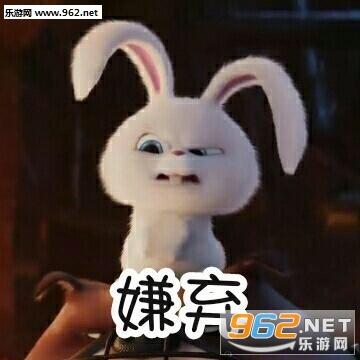 略略略略略来打我啊兔子小白表情包图片|全部