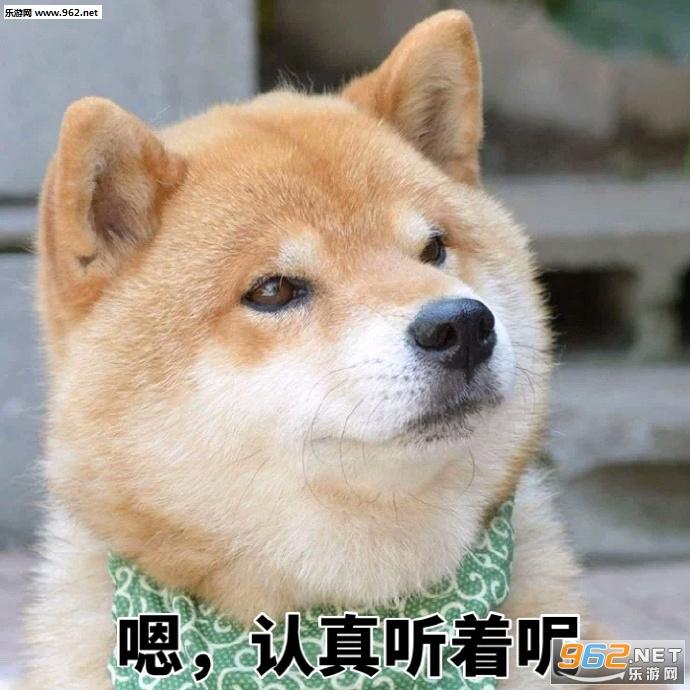 我警告你给我收敛点柴犬表情包带字图片