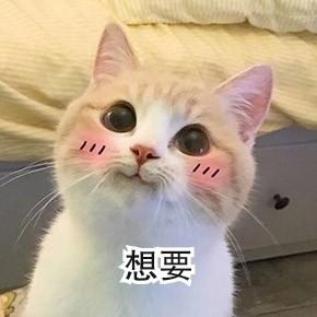 你的小可爱突然出现了萌猫表情包图片