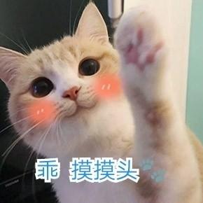 你的小可爱突然出现了萌猫表情表情土豆图片蔬菜图片