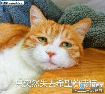 今天也超衰橘猫搞笑图片|日常吸猫表情下载好看表情包动态图片